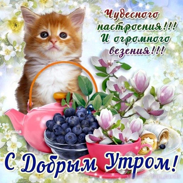 http://cs607618.vk.me/v607618272/5443/kep0JKvRjjM.jpg