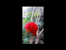 Джунгли парк Тенерифе общение с попугайчиками