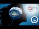 Борис Чернышев: Как мозг управляет поведением: от врожденного поведения до когнитивного контроля