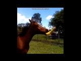 Чем твои лошади в АО занимаются, пока тебя нет на ранчо )))