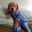 Всем надевать пижамки и в кровать