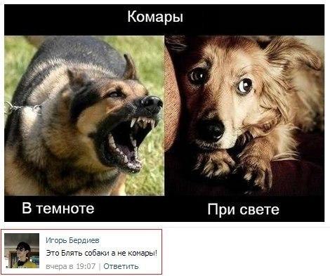 http://cs14111.vk.me/c7008/v7008551/11d54/vF4wzYyKZ3c.jpg