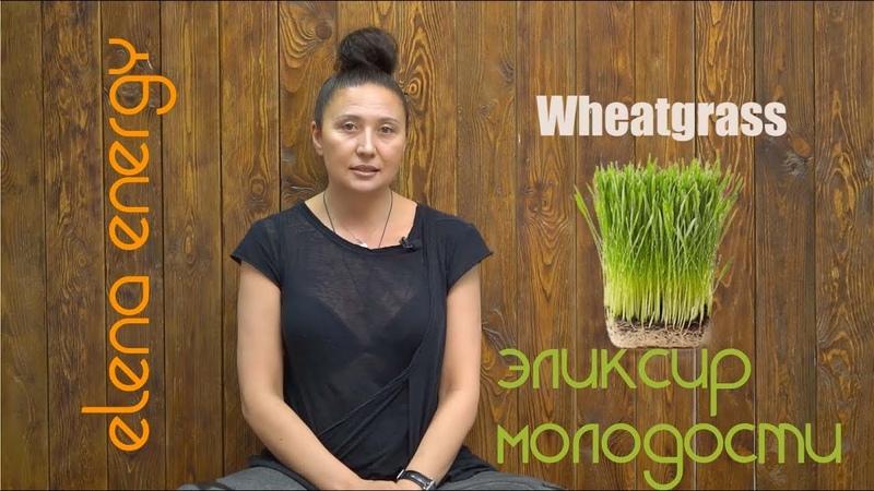 Эликсир молодости - wheatgrass! (витграсс)