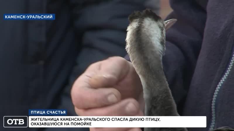 Жительница Каменска-Уральского спасла дикую птицу, оказавшуюся на помойке