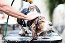 О груминге. Зачем разводить шампунь для собак?