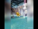 18.06.2018 аквапарк