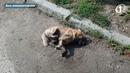 В Измаиле продолжается травля собак