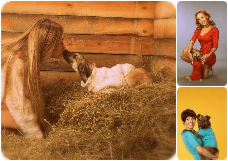 Социальный проект, направленный на популяризацию проблемы беспризорных животных, «В поисках настоящего».