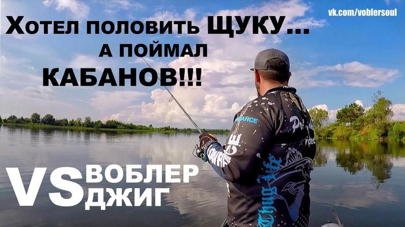 Хотел половить Щуку, а поймал Кабанов... Воблер VS Джиг. Спиннинг летом на озере. Рыбалка 2018.