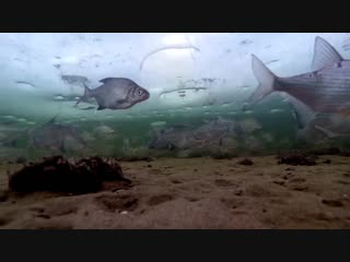 Underwater_tv