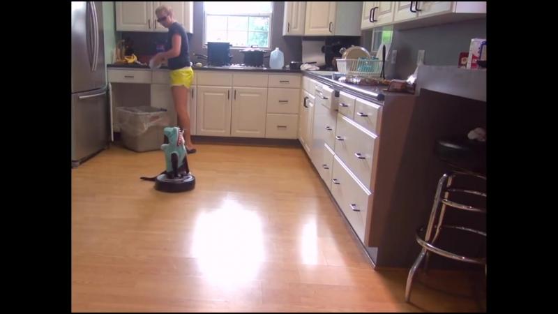 Трудолюбивый кот помогает наводить порядок в доме