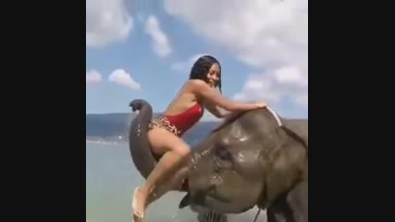 Слоник-троллит