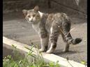 В Уфе в подвале дома заживо замуровали кошек