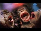 Поющие животные или животные поют! СМОТРЕТЬ ВИДЕО!! РЖАЧ 100%!!