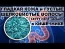 ВИТАМИН В7 ГЛАДКАЯ КОЖА и ГУСТЫЕ ПЫШНЫЕ ВОЛОСЫ БЕРУТ свое начало в кишечнике