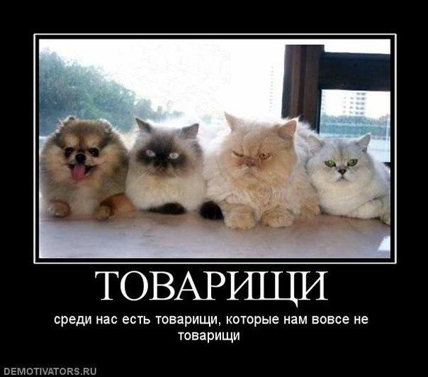 http://cs317618.userapi.com/v317618288/232c/BGwVORIGDKA.jpg