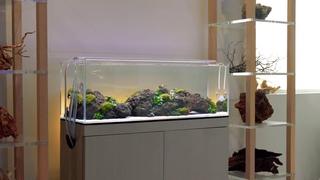 Serene LED Aquascape: Greening at Aquarium Design Group