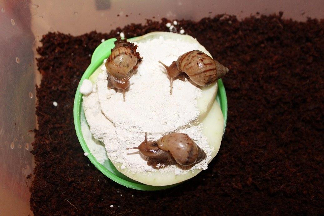 ~liquid snails~ - Страница 18 7Oume73XOfo