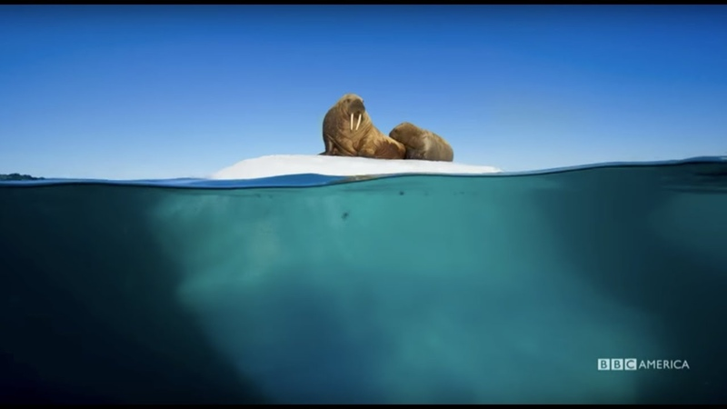 Planet Earth: Blue Planet II | Radiohead Hans Zimmer - (ocean) bloom | BBC America