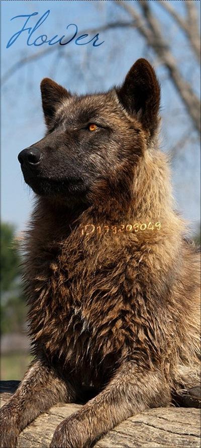 Official Dudlik, 24 апреля 1995, Ростов-на-Дону, id179209049
