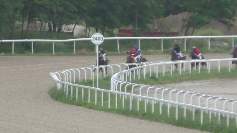 17.06.2018 - Открытый приз на лошадях 3-х лет и старше ахалтекинской породы - Полатгуш-Шах