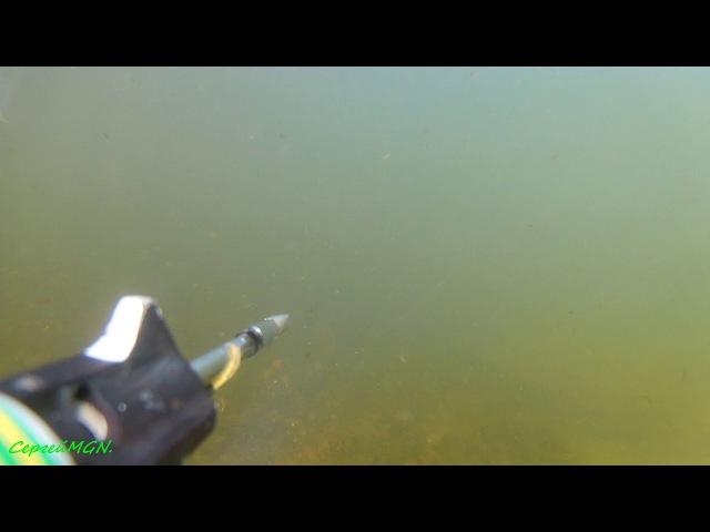 Выстрел подводного ружья Оса.