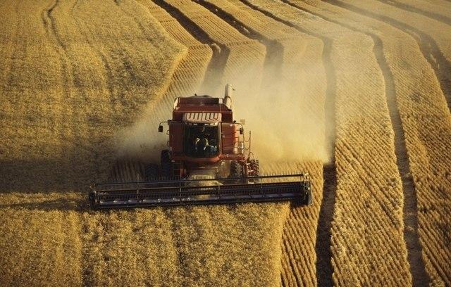 Аграрии Ростовской области собрали 5,8 миллионов тонн ранних зерновых
