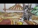 Котя умывается