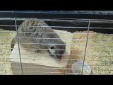 2017 контактный зоопарк в Гранде_0036