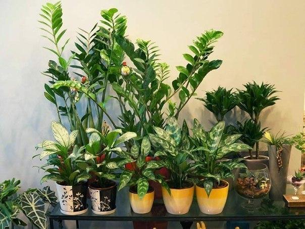 Полезные комнатные растения!