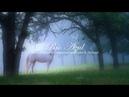 Música Celta de Flauta, Arpa y Piano: Música Relajante, Música para Meditar y Relajarse ☼7