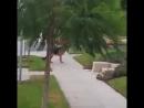 Пес потерял хозяина на прогулке