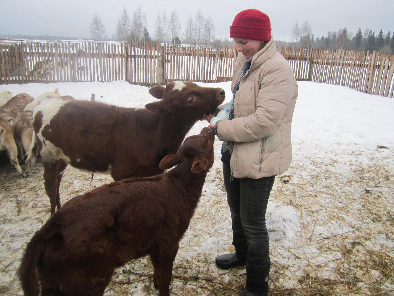 Выращивание бычков рентабельность 34