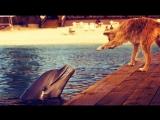 Зевс и Роксана. Zeus and Roxanne.1997.DOLPHIN &amp DOG SPECIAL FRIENDSHIP - Vangelis Song Of The Seas.