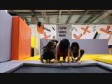 Батутная арена - ПораПопробовать