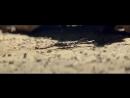 Реклама Audi Q7 quattro 2016 _ Ауди Прогноз погоды