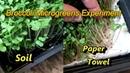 Broccoli Microgreens Growing Experiment: Paper Towels Vs. Soil