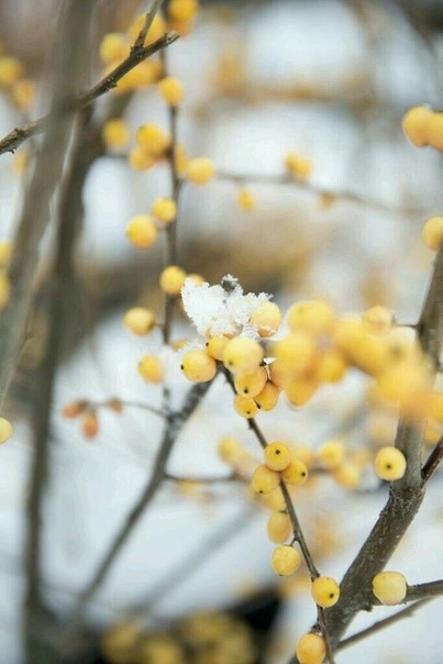 И дни пролетают... И скоро зима...