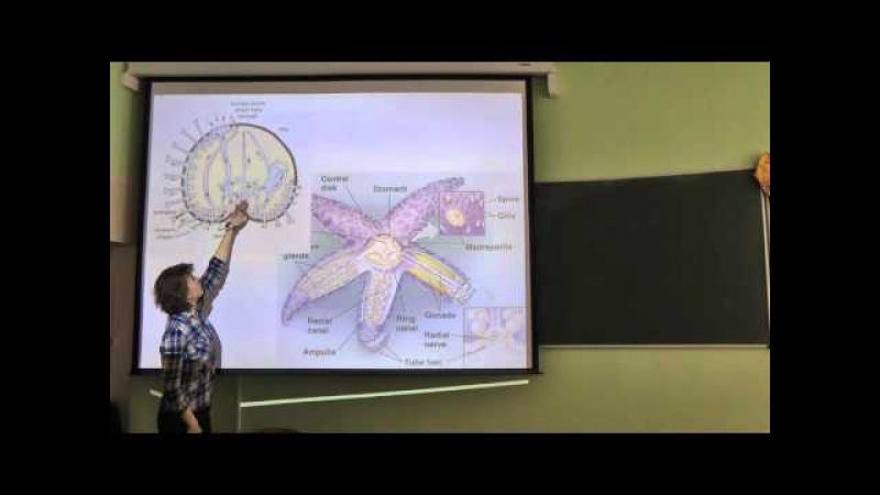 Зоология беспозвоночных - лекция 4 - Римская-Корсакова Н.Н.