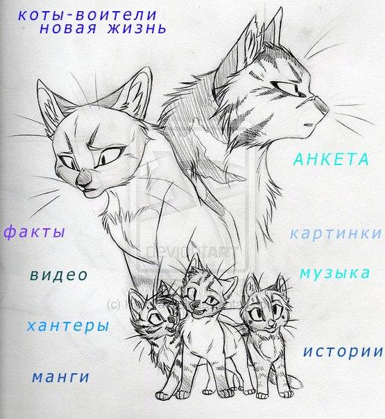 Игра коты воители новая жизнь