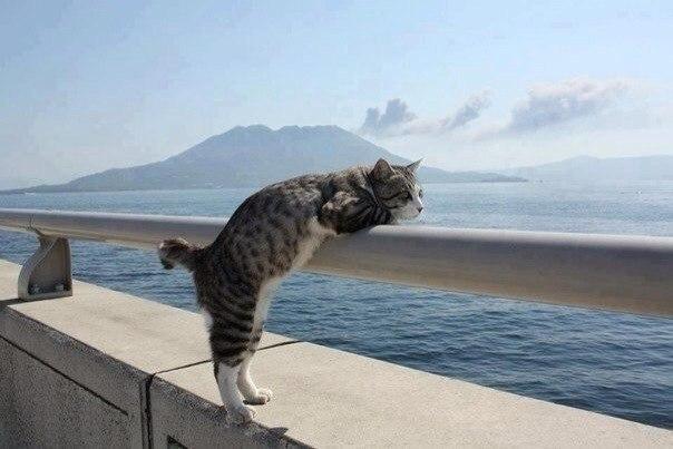 Даже котики любуются морем