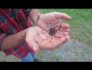 стирающееся мехенди и агонизирующая бабочка