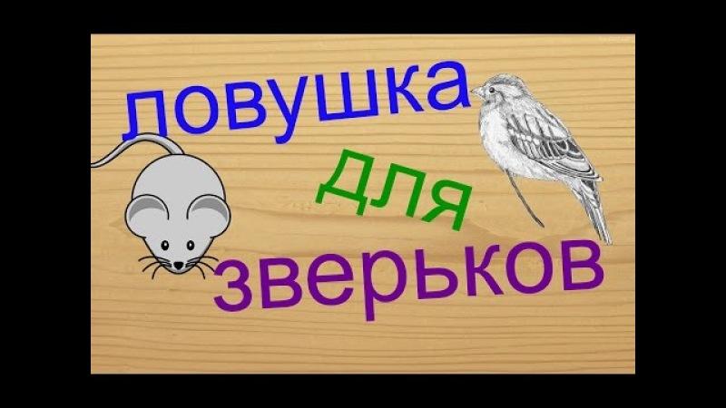 Как сделать ловушку для птиц и мышей\How to make a trap for birds and mouse