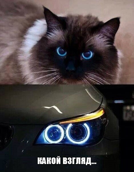 глаз BMW