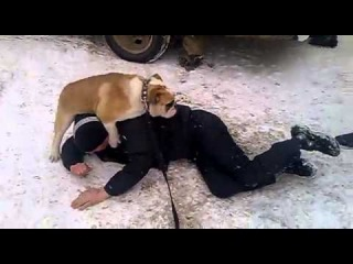 Собака трахает человека / The dog fucking man in ass