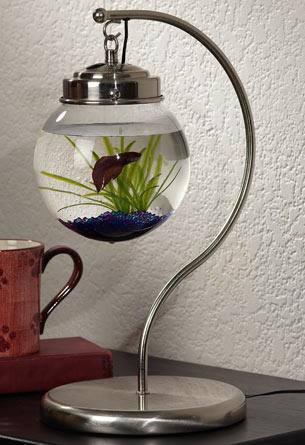 Необычный аквариум (1 фото)