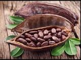 Коричневое золото полезные свойства какао для организма человека