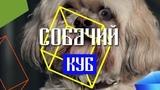 КУБ#43 СОБАЧИЙ