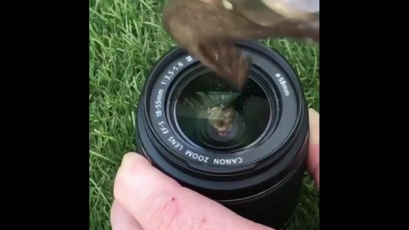 Do you think this is a rented lens❓