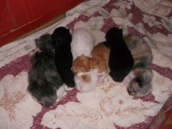 Kbps avg мультики черный кот за углом корову